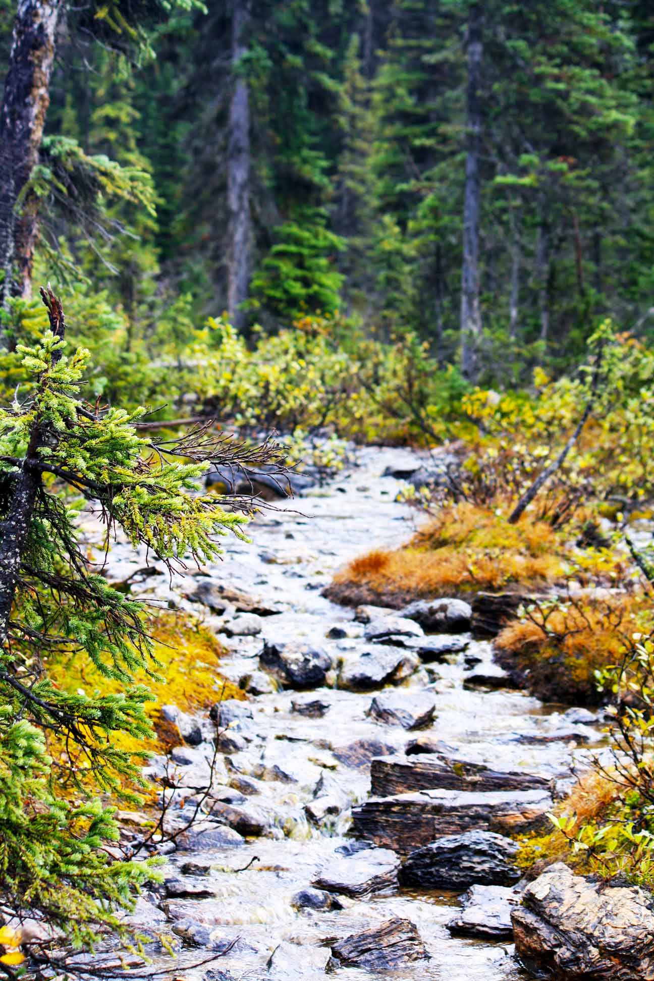 A stream on a guided hike with self propelled adventures