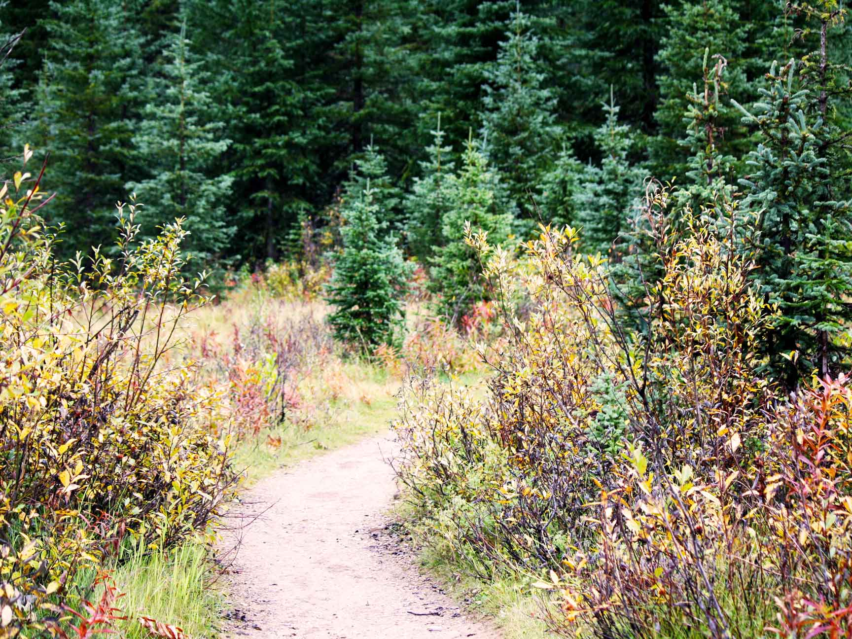 Guided hike with Laura from Self Propelled Adventures